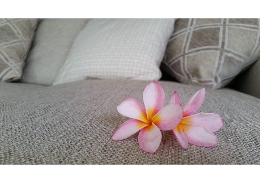 南国沖縄の花プルメリア